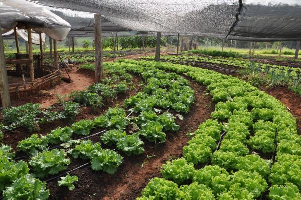 Mato Grosso do Sul terá Plano Estadual de Agroecologia