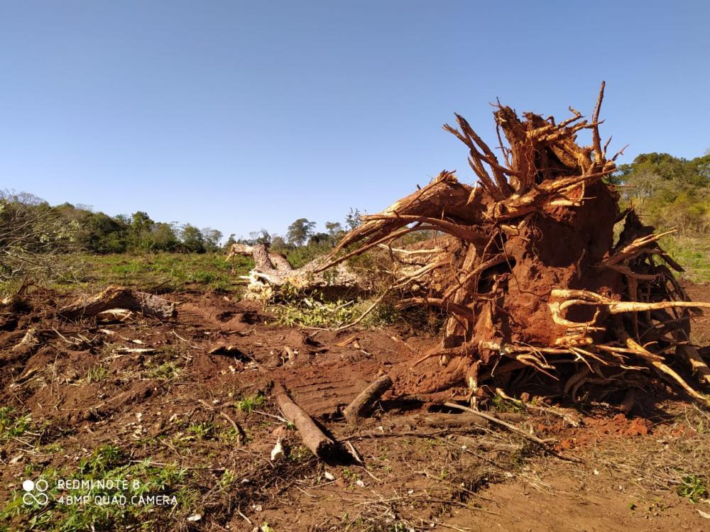 Polícia Ambiental autua assentado por extração ilegal de madeira