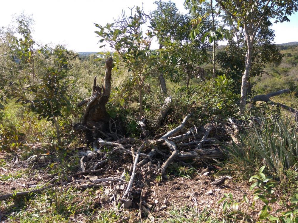 Produtora rural é multada por desmatamento ilegal em Bela Vista