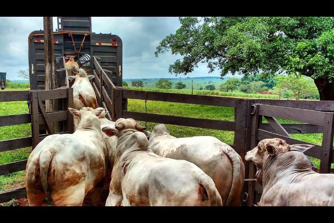 Pelo menos 17% da carne produzidas na Amazônia e no Cerrado estariam