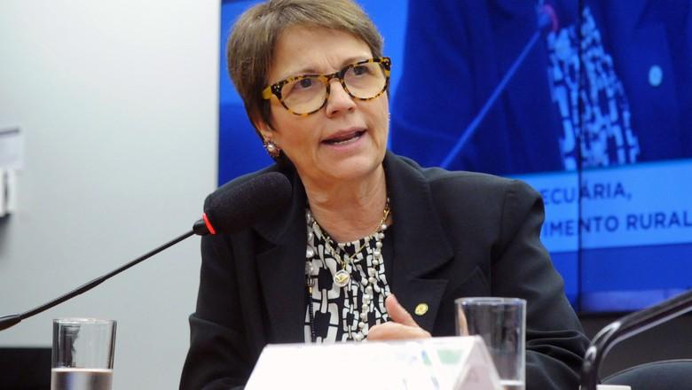 Responsável pela pasta de Agricultura, Tereza Cristina poderá disputar a presidência da Câmara Federal