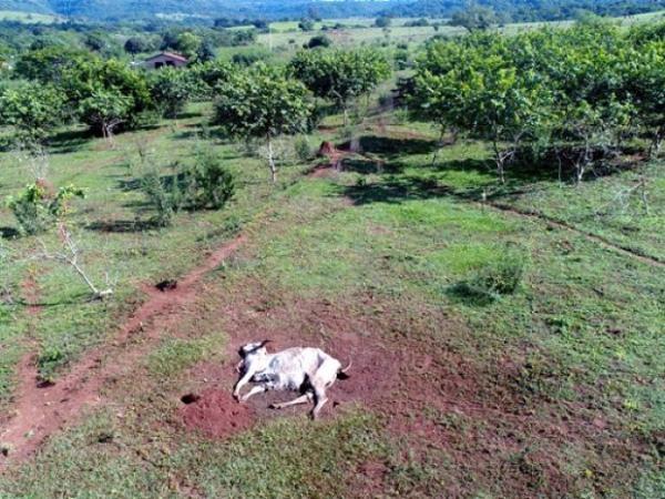 Fazendeiro que abandonou gado perde licença para mexer com animais