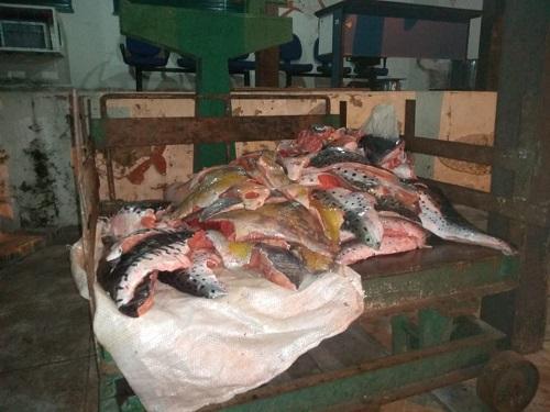 Ambiental inicia operação de prevenção e repressão à pesca predatória