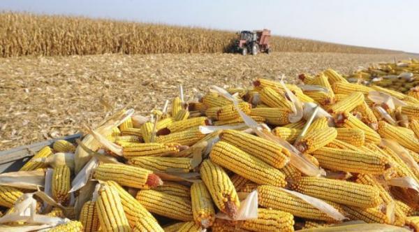 Produção de milho em MS pode chegar a mais de 10 milhões de toneladas