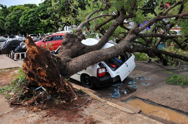 Rajadas de ventos derrubam pelo menos três árvores na Capital