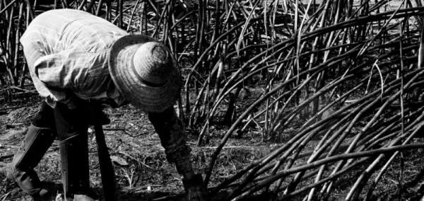Comissão para tratar da erradicação do trabalho escravo é instituída em MS