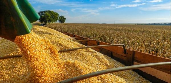 Safra recorde de milho tem aumento de 64% e fecha em 12,16 milhões de toneladas