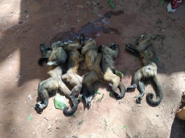 Macacos são mortos envenenados e a tiros em reserva