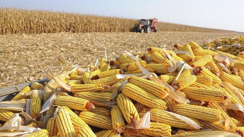 Exportações de milho crescem 401% e saldo da balança comercial de MS chega a 2,7 bilhões de dólares