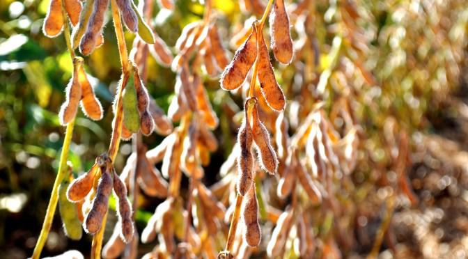 Prazo para cadastro das áreas de cultivo de soja em MS termina dia 10 de janeiro